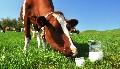 Hogyan éljünk tej nélkül?